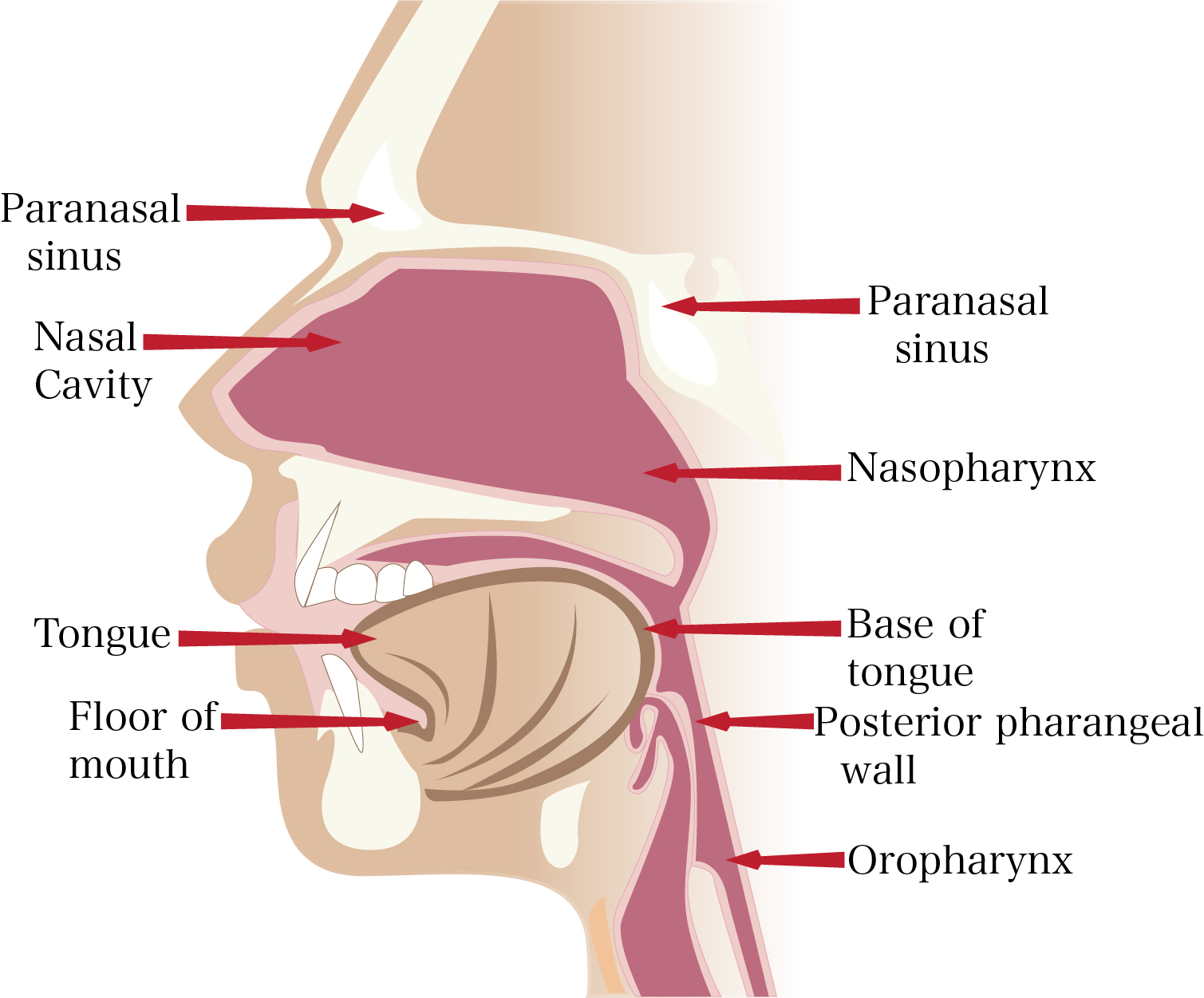external structure of the nose - photo